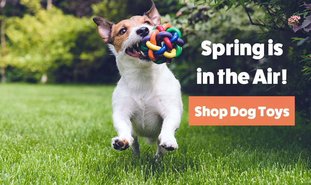 Spring is in the air, shop Dog Toys