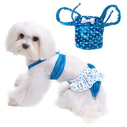 dog swimsuits & swimwear