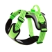 Active Dazzle Harness in 4 Colors - dgpts-activedaz