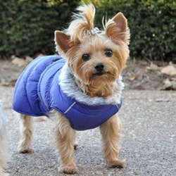 Alpine  Puffer Coat in BLUE puppy bed,  beds,dog mat, pet mat, puppy mat, fab dog pet sweater, dog swepet clothes, dog clothes, puppy clothes, pet store, dog store, puppy boutique store, dog boutique, pet boutique, puppy boutique, Bloomingtails, dog, small dog clothes, large dog clothes, large dog costumes, small dog costumes, pet stuff, Halloween dog, puppy Halloween, pet Halloween, clothes, dog puppy Halloween, dog sale, pet sale, puppy sale, pet dog tank, pet tank, pet shirt, dog shirt, puppy shirt,puppy tank, I see spot, dog collars, dog leads, pet collar, pet lead,puppy collar, puppy lead, dog toys, pet toys, puppy toy, dog beds, pet beds, puppy bed,  beds,dog mat, pet mat, puppy mat, fab dog pet sweater, dog sweater, dog winter, pet winter,dog raincoat, pet rain