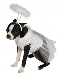 Angel with Halo Pet Costume