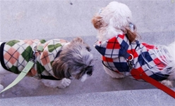 Argyle Dog Hoodies-various colors!