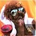 Aviator Dog Sunglasses - jcla-aviator