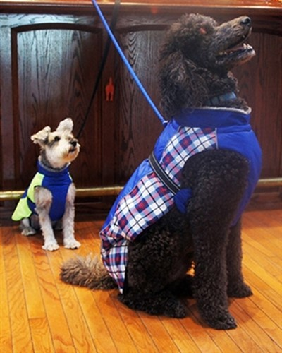 Royal Blue Plaid Alpine All Weather Coat  - dogdes-alpine-blue