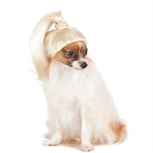 Blond Ponytail Dog Wig