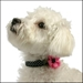 Bow Wow Bows Collection - Diva Daisy Dog Collar - prettysm-divaR-X3X