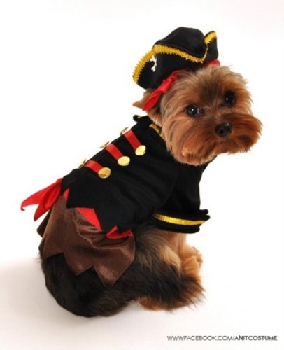 Buccaneer Pirate Dog Costume - ant-buccaneerX-G36