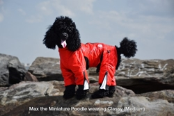 Classy Suit  wooflink, susan lanci, dog clothes, small dog clothes, urban pup, pooch outfitters, dogo, hip doggie, doggie design, small dog dress, pet clotes, dog boutique. pet boutique, bloomingtails dog boutique, dog raincoat, dog rain coat, pet raincoat, dog shampoo, pet shampoo, dog bathrobe, pet bathrobe, dog carrier, small dog carrier, doggie couture, pet couture, dog football, dog toys, pet toys, dog clothes sale, pet clothes sale, shop local, pet store, dog store, dog chews, pet chews, worthy dog, dog bandana, pet bandana, dog halloween, pet halloween, dog holiday, pet holiday, dog teepee, custom dog clothes, pet pjs, dog pjs, pet pajamas, dog pajamas,dog sweater, pet sweater, dog hat, fabdog, fab dog, dog puffer coat, dog winter jacket, dog col