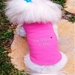 Daddy's Girl Dog Tank in Many Colors - daisy-dad-tank