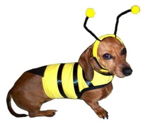 Dog Bumble Bee Costume