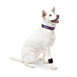 Dog Wrist Wrap  dog bowls,susan lanci, puppia,wooflink, luxury dog boutique,tonimari,pet clothes, dog clothes, puppy clothes, pet store, dog store, puppy boutique store, dog boutique, pet boutique, puppy boutique, Bloomingtails, dog, small dog clothes, large dog clothes, large dog costumes, small dog costumes, pet stuff, Halloween dog, puppy Halloween, pet Halloween, clothes, dog puppy Halloween, dog sale, pet sale, puppy sale, pet dog tank, pet tank, pet shirt, dog shirt, puppy shirt,puppy tank, I see spot, dog collars, dog leads, pet collar, pet lead,puppy collar, puppy lead, dog toys, pet toys, puppy toy, dog beds, pet beds, puppy bed,  beds,dog mat, pet mat, puppy mat, fab dog pet sweater, dog sweater, dog winter, pet winter,dog raincoat, pet raincoat