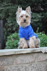 Flex-Fit Dog Hoodie - Blue Roxy & Lulu, wooflink, susan lanci, dog clothes, small dog clothes, urban pup, pooch outfitters, dogo, hip doggie, doggie design, small dog dress, pet clotes, dog boutique. pet boutique, bloomingtails dog boutique, dog raincoat, dog rain coat, pet raincoat, dog shampoo, pet shampoo, dog bathrobe, pet bathrobe, dog carrier, small dog carrier, doggie couture, pet couture, dog football, dog toys, pet toys, dog clothes sale, pet clothes sale, shop local, pet store, dog store, dog chews, pet chews, worthy dog, dog bandana, pet bandana, dog halloween, pet halloween, dog holiday, pet holiday, dog teepee, custom dog clothes, pet pjs, dog pjs, pet pajamas, dog pajamas,dog sweater, pet sweater, dog hat, fabdog, fab dog, dog puffer coat, dog winter ja