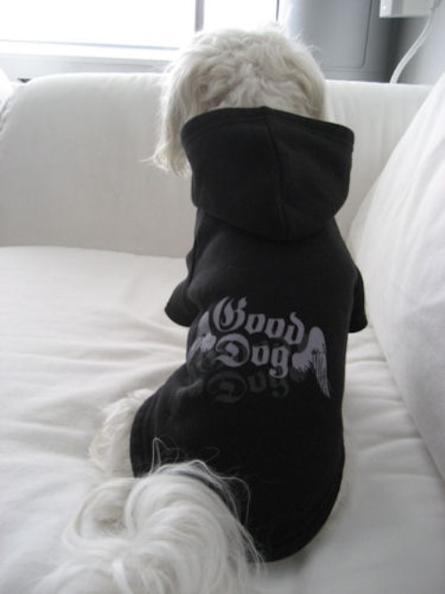 Good Dog Charity Dog Hoodie - tou-charityS-XQT