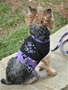 Halloween Dog Harness - Too Cute to Spook beds, puppy bed,  beds,dog mat, pet mat, puppy mat, fab dog pet sweater, dog swepet clothes, dog clothes, puppy clothes, pet store, dog store, puppy boutique store, dog boutique, pet boutique, puppy boutique, Bloomingtails, dog, small dog clothes, large dog clothes, large dog costumes, small dog costumes, pet stuff, Halloween dog, puppy Halloween, pet Halloween, clothes, dog puppy Halloween, dog sale, pet sale, puppy sale, pet dog tank, pet tank, pet shirt, dog shirt, puppy shirt,puppy tank, I see spot, dog collars, dog leads, pet collar, pet lead,puppy collar, puppy lead, dog toys, pet toys, puppy toy, dog beds, pet beds, puppy bed,  beds,dog mat, pet mat, puppy mat, fab dog pet sweater, dog sweater, dog winter, pet winter,dog raincoat, pe