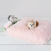 Himalayan Yak Dog Mat  in Peach or Pink wooflink, susan lanci, dog clothes, small dog clothes, urban pup, pooch outfitters, dogo, hip doggie, doggie design, small dog dress, pet clotes, dog boutique. pet boutique, bloomingtails dog boutique, dog raincoat, dog rain coat, pet raincoat, dog shampoo, pet shampoo, dog bathrobe, pet bathrobe, dog carrier, small dog carrier, doggie couture, pet couture, dog football, dog toys, pet toys, dog clothes sale, pet clothes sale, shop local, pet store, dog store, dog chews, pet chews, worthy dog, dog bandana, pet bandana, dog halloween, pet halloween, dog holiday, pet holiday, dog teepee, custom dog clothes, pet pjs, dog pjs, pet pajamas, dog pajamas,dog sweater, pet sweater, dog hat, fabdog, fab dog, dog puffer coat, dog winter jacket, dog col