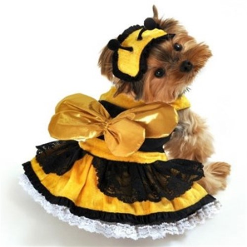Honey Bee  Dog Costume - ant-honey-beeL-1S2