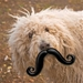 Humunga Stache Dog Toy - moody-stache