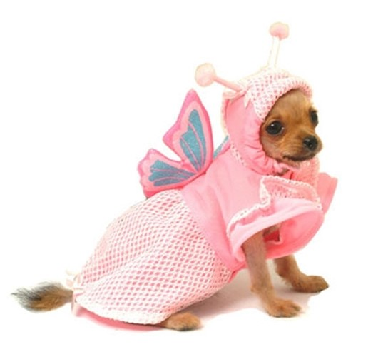 Lady Butterfly Dog Costume - pam-butterfly-cost