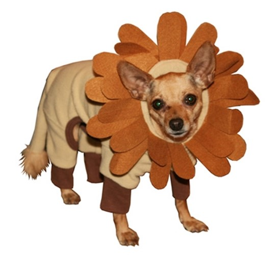 Lion King Dog Costume - hip-lion-kingX-HUS