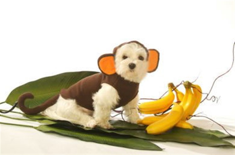 Monkey Dog Costume  - dogdes-monkey-costume