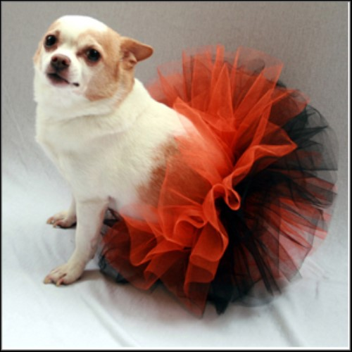 Orange & Black Tutu wooflink, susan lanci, dog clothes, small dog clothes, urban pup, pooch outfitters, dogo, hip doggie, doggie design, small dog dress, pet clotes, dog boutique. pet boutique, bloomingtails dog boutique, dog raincoat, dog rain coat, pet raincoat, dog shampoo, pet shampoo, dog bathrobe, pet bathrobe, dog carrier, small dog carrier, doggie couture, pet couture, dog football, dog toys, pet toys, dog clothes sale, pet clothes sale, shop local, pet store, dog store, dog chews, pet chews, worthy dog, dog bandana, pet bandana, dog halloween, pet halloween, dog holiday, pet holiday, dog teepee, custom dog clothes, pet pjs, dog pjs, pet pajamas, dog pajamas,dog sweater, pet sweater, dog hat, fabdog, fab dog, dog puffer coat, dog winter jacket, dog col