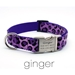 Personalized Collar & Lead Ginger - fdc-ginger
