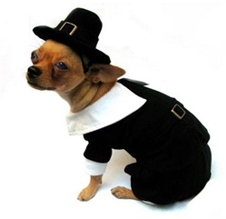 Pilgrim Boy Costume dog bowls,susan lanci, puppia,wooflink, luxury dog boutique,tonimari,pet clothes, dog clothes, puppy clothes, pet store, dog store, puppy boutique store, dog boutique, pet boutique, puppy boutique, Bloomingtails, dog, small dog clothes, large dog clothes, large dog costumes, small dog costumes, pet stuff, Halloween dog, puppy Halloween, pet Halloween, clothes, dog puppy Halloween, dog sale, pet sale, puppy sale, pet dog tank, pet tank, pet shirt, dog shirt, puppy shirt,puppy tank, I see spot, dog collars, dog leads, pet collar, pet lead,puppy collar, puppy lead, dog toys, pet toys, puppy toy, dog beds, pet beds, puppy bed,  beds,dog mat, pet mat, puppy mat, fab dog pet sweater, dog sweater, dog winter, pet winter,dog raincoat, pet raincoat,