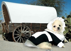 Pilgrim Girl Costume  dog bowls,susan lanci, puppia,wooflink, luxury dog boutique,tonimari,pet clothes, dog clothes, puppy clothes, pet store, dog store, puppy boutique store, dog boutique, pet boutique, puppy boutique, Bloomingtails, dog, small dog clothes, large dog clothes, large dog costumes, small dog costumes, pet stuff, Halloween dog, puppy Halloween, pet Halloween, clothes, dog puppy Halloween, dog sale, pet sale, puppy sale, pet dog tank, pet tank, pet shirt, dog shirt, puppy shirt,puppy tank, I see spot, dog collars, dog leads, pet collar, pet lead,puppy collar, puppy lead, dog toys, pet toys, puppy toy, dog beds, pet beds, puppy bed,  beds,dog mat, pet mat, puppy mat, fab dog pet sweater, dog sweater, dog winter, pet winter,dog raincoat, pet raincoat,