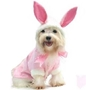 Pink Bunny Dog Costume dog bowls,susan lanci, puppia,wooflink, luxury dog boutique,tonimari,pet clothes, dog clothes, puppy clothes, pet store, dog store, puppy boutique store, dog boutique, pet boutique, puppy boutique, Bloomingtails, dog, small dog clothes, large dog clothes, large dog costumes, small dog costumes, pet stuff, Halloween dog, puppy Halloween, pet Halloween, clothes, dog puppy Halloween, dog sale, pet sale, puppy sale, pet dog tank, pet tank, pet shirt, dog shirt, puppy shirt,puppy tank, I see spot, dog collars, dog leads, pet collar, pet lead,puppy collar, puppy lead, dog toys, pet toys, puppy toy, dog beds, pet beds, puppy bed,  beds,dog mat, pet mat, puppy mat, fab dog pet sweater, dog sweater, dog winter, pet winter,dog raincoat, pet raincoat,
