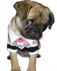Pink Striped Classic Polo Shirt dog bowls,susan lanci, puppia,wooflink, luxury dog boutique,tonimari,pet clothes, dog clothes, puppy clothes, pet store, dog store, puppy boutique store, dog boutique, pet boutique, puppy boutique, Bloomingtails, dog, small dog clothes, large dog clothes, large dog costumes, small dog costumes, pet stuff, Halloween dog, puppy Halloween, pet Halloween, clothes, dog puppy Halloween, dog sale, pet sale, puppy sale, pet dog tank, pet tank, pet shirt, dog shirt, puppy shirt,puppy tank, I see spot, dog collars, dog leads, pet collar, pet lead,puppy collar, puppy lead, dog toys, pet toys, puppy toy, dog beds, pet beds, puppy bed,  beds,dog mat, pet mat, puppy mat, fab dog pet sweater, dog sweater, dog winter, pet winter,dog raincoat, pet raincoat,