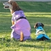 Pink and Lavender Dog Raincoat - dogdes-pink-raincoat