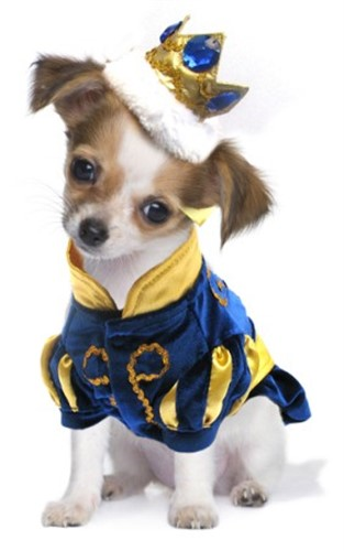 Prince Charming Dog Costume - pampet-prince