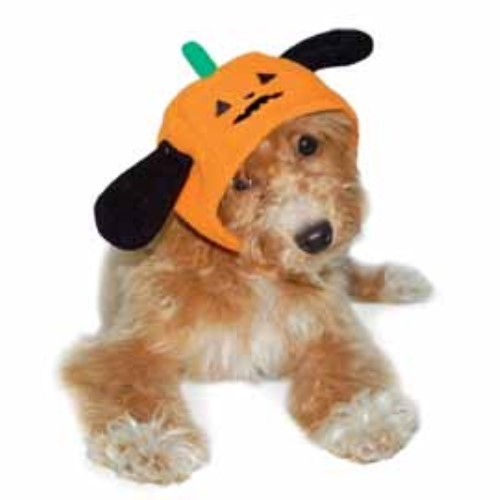 Pumpkin Dog Hat - dgo-pumphat
