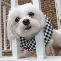 Puppy Bumpers - Black & White Checkers pet clothes, dog clothes, puppy clothes, pet store, dog store, puppy boutique store, dog boutique, pet boutique, puppy boutique, Bloomingtails, dog, small dog clothes, large dog clothes, large dog costumes, small dog costumes, pet stuff, Halloween dog, puppy Halloween, pet Halloween, clothes, dog puppy Halloween, dog sale, pet sale, puppy sale, pet dog tank, pet tank, pet shirt, dog shirt, puppy shirt,puppy tank, I see spot, dog collars, dog leads, pet collar, pet lead,puppy collar, puppy lead, dog toys, pet toys, puppy toy, west paw designs, dog beds, pet beds, puppy bed,  beds,dog mat, pet mat, puppy mat, fab dog pet sweater, dog sweater, dog winter, pet winter,dog raincoat, pet raincoat, dog harness, puppy harness, pet harness, dog colla