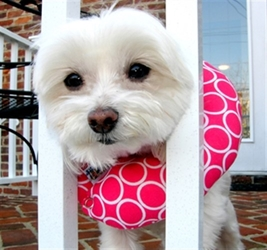 Puppy Bumpers - Blue Classic or Pink Classic