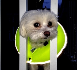 Puppy Bumpers - Glow Pups Safety Yellow Reflective