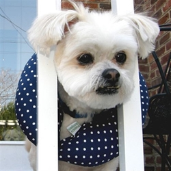Puppy Bumpers - Navy Dots or Pink Dots