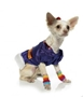 Rainbow Cutie Dress/Costume  puppy bed,  beds,dog mat, pet mat, puppy mat, fab dog pet sweater, dog swepet clothes, dog clothes, puppy clothes, pet store, dog store, puppy boutique store, dog boutique, pet boutique, puppy boutique, Bloomingtails, dog, small dog clothes, large dog clothes, large dog costumes, small dog costumes, pet stuff, Halloween dog, puppy Halloween, pet Halloween, clothes, dog puppy Halloween, dog sale, pet sale, puppy sale, pet dog tank, pet tank, pet shirt, dog shirt, puppy shirt,puppy tank, I see spot, dog collars, dog leads, pet collar, pet lead,puppy collar, puppy lead, dog toys, pet toys, puppy toy, dog beds, pet beds, puppy bed,  beds,dog mat, pet mat, puppy mat, fab dog pet sweater, dog sweater, dog winter, pet winter,dog raincoat, pet rai