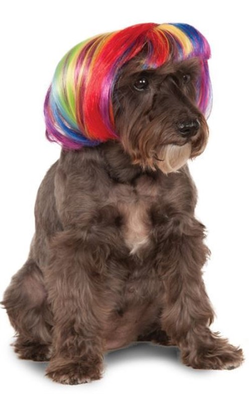 Image result for rainbow dog