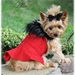 Red Wool Classic Dog Coat Harness with Fur Collar and Matching Leash  - dd-red-coat
