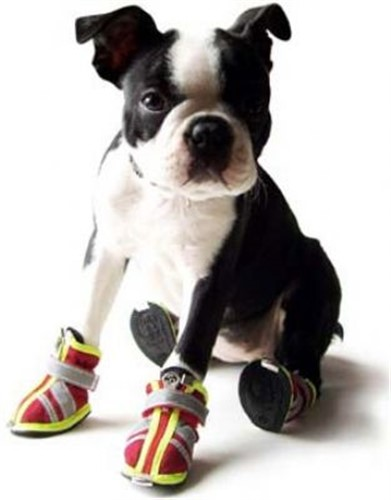 Reflector Dog Boots in Various Colors - dsd-reflect-boots