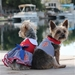 Sailor Boy Fabric Dog Harness with Matching Leash   - dogdes-sailorboy-harness
