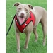 Sidekick Dog Harness - Many Colors - wd-sidekick-harness