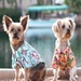 Hawaiian Camp Shirt - Many Colors   - dogdes-haw-shirt