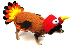 Turkey  Costume dog bowls,susan lanci, puppia,wooflink, luxury dog boutique,tonimari,pet clothes, dog clothes, puppy clothes, pet store, dog store, puppy boutique store, dog boutique, pet boutique, puppy boutique, Bloomingtails, dog, small dog clothes, large dog clothes, large dog costumes, small dog costumes, pet stuff, Halloween dog, puppy Halloween, pet Halloween, clothes, dog puppy Halloween, dog sale, pet sale, puppy sale, pet dog tank, pet tank, pet shirt, dog shirt, puppy shirt,puppy tank, I see spot, dog collars, dog leads, pet collar, pet lead,puppy collar, puppy lead, dog toys, pet toys, puppy toy, dog beds, pet beds, puppy bed,  beds,dog mat, pet mat, puppy mat, fab dog pet sweater, dog sweater, dog winter, pet winter,dog raincoat, pet raincoat,