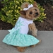 Turquoise Crystal Dress with D-Ring and Matching Leash   - dd-turquoise-dress