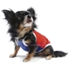 USA Cool Dog Tank - Truly Oscar - on-usaX-6YM