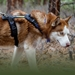 Urban Trail Adjustable Dog Harness - ao-urban-harness