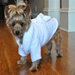 White Silver Tiara Dog Bathrobe  - dogdes-silvertiara-bathrobe