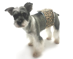 Wild Child Leopard Belly Band  wooflink, susan lanci, dog clothes, small dog clothes, urban pup, pooch outfitters, dogo, hip doggie, doggie design, small dog dress, pet clotes, dog boutique. pet boutique, bloomingtails dog boutique, dog raincoat, dog rain coat, pet raincoat, dog shampoo, pet shampoo, dog bathrobe, pet bathrobe, dog carrier, small dog carrier, doggie couture, pet couture, dog football, dog toys, pet toys, dog clothes sale, pet clothes sale, shop local, pet store, dog store, dog chews, pet chews, worthy dog, dog bandana, pet bandana, dog halloween, pet halloween, dog holiday, pet holiday, dog teepee, custom dog clothes, pet pjs, dog pjs, pet pajamas, dog pajamas,dog sweater, pet sweater, dog hat, fabdog, fab dog, dog puffer coat, dog winter jacket, dog col